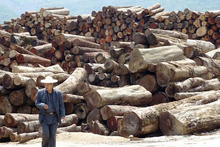 La majeure partie du bois tropical importé en France est d'origine chinoise