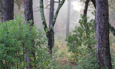 Forêt et FAO