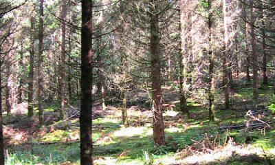 la compensation carbone forestière