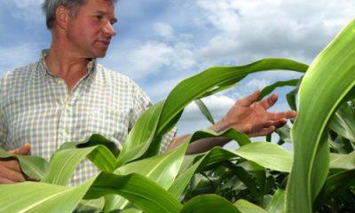 Monsanto retire ses demandes d'autorisations de culture d'OGM