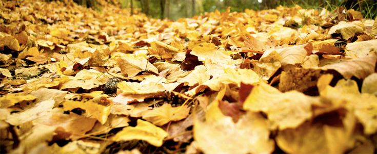 que faire des feuilles mortes