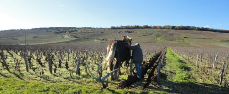 Vigne de vin nature
