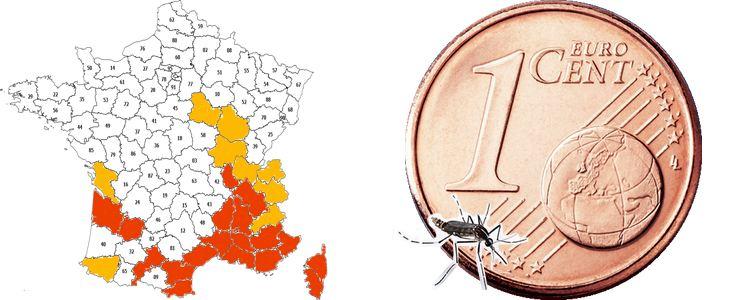 Le moustique tigre est un petit insecte, de plus en plus présent en France