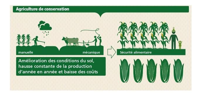 L'agriculture de conservation pour lutter contre la faim
