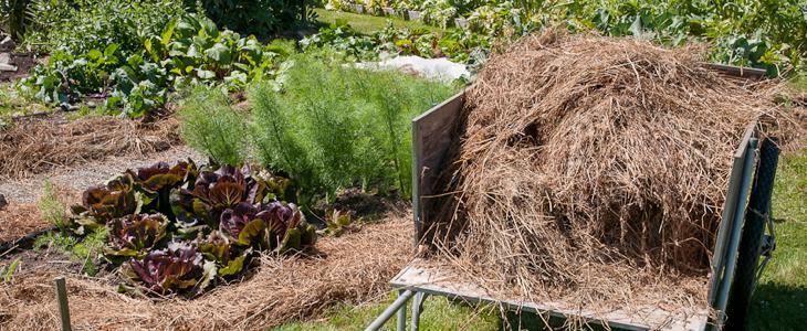 paillage jardin et potager