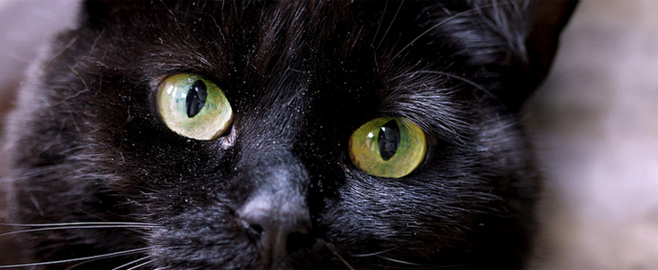 maison-chats