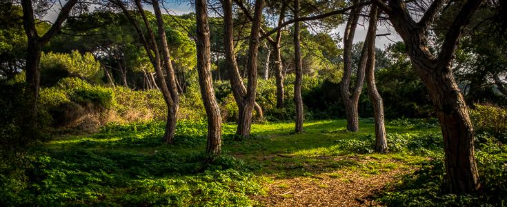 Une forêt enchantée dans la Baie de Cannes