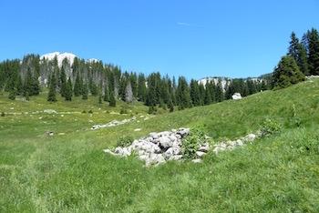 Espace qui fut un temps utilisé en pâturage, Veliki Lubenovac