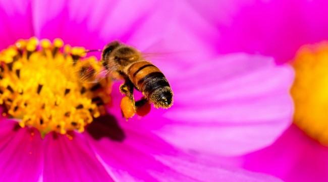 abeilles-referendum
