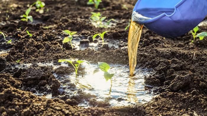urine-engrais-biologique-toopi-organics