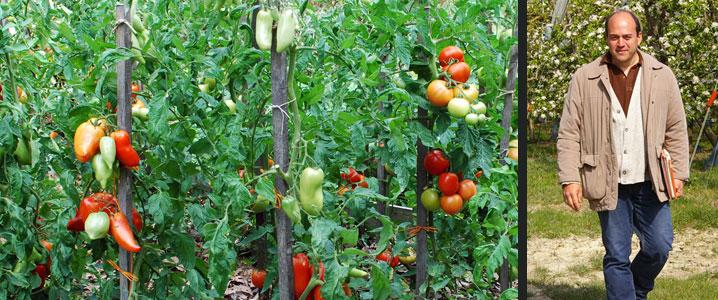 culture bio tomates