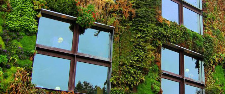 mur vegetal maison