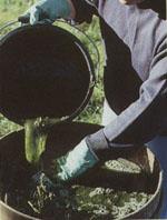 Purin d ortie et compagnie pourraient se voir autoris s - Purin d ortie fabrication ...